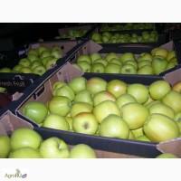 Яблоки Голден оптом. Краснодарский Край