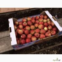 Яблоки сорт ГАЛА