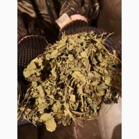 Шелковица лист (Тутовое дерево) (оптом от 5кг)