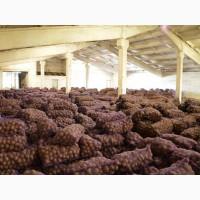 Мелкий картофель оптом от производителя