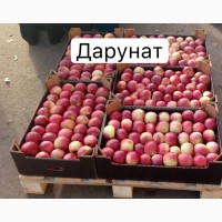 Яблоко Оптом Дарунат