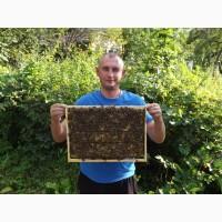 Продам пчеломаток 2021 от производителя Карпатской породи и Крника Белгородская обл