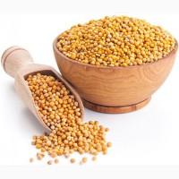 Семена горчицы Радуга, Руслана, Колла, Фея, Джуна
