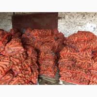 Продам морковь немытую