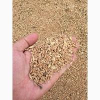 Продаю фуражную пшеницу