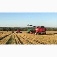 Продаем лучшую пшеницу