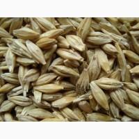 Фуражное зерно в Ивановской области