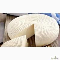 Сыр брынза оптом