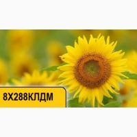 Купить подсолнечник 8Х288КЛДМ по низкой цене