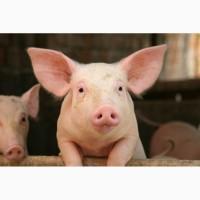 Бактерии для подстилки (ферментационная подстилка) - АгроБакт