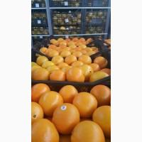 Продажа грейпфрута оптом по цене от производителя