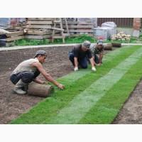 Предлагаем травосмеси и рулонные газоны для обустройства спортивных площадок