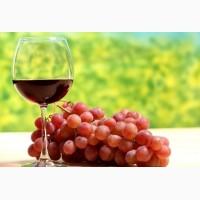Виноград изабелла красный