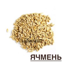 Ячмень яровой семена
