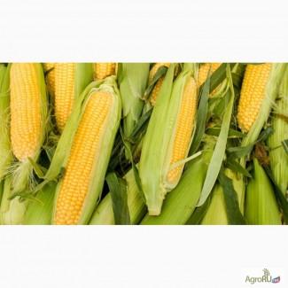 Гибриды семена кукурузы П8400 (Пионер, Pioneer)