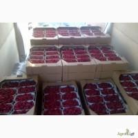Малина сорта Полка (Полька) оптом без посредников. Цены сезонные 4, 5 бел.р/кг