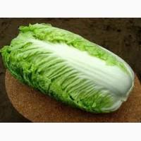 Продаю салат китайский(пекинку) на постоянной основе