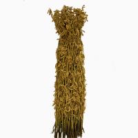 Семена сои сорт Лира. Урожай 2019 года