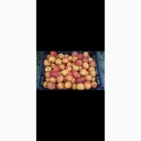 Персики из Азербайджана