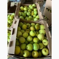 Яблоки Кубанские оптом