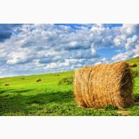 Продам сено. Урожай 2021 года