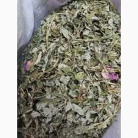 Шиповник майский цвет (оптом от 5кг)