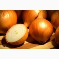 Лук репчатый продовольственный и на выгонку зелени мелкий средний крупный