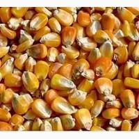 Фуражное зерно в Костромской области