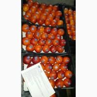 Продаем апельсины 1 категории из Сирии, сорт Красный Португальский
