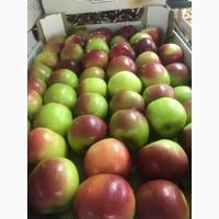 Яблоки различных сортов оптом по ценам от производителя
