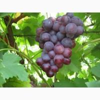Виноград черенки