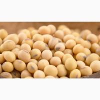 Семена сои сорт Вилана. Урожай 2019 года