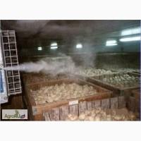 Туманообразующая установка для создания влажности при хранении фруктов и овощей