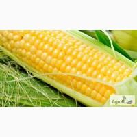 Гибриды семена кукурузы П7709 (Пионер, Pioneer)