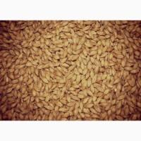 Кормовое зерно с доставкой в Ленинградскую область