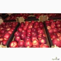 Яблоки оптом калиброванные, сортированные от прямого импортера со склада в Москве