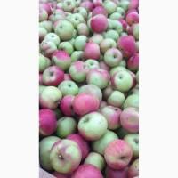 Яблоко разных сортов