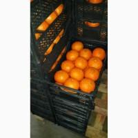 Продаем апельсины 1 категории из Сирии, сорт Valencia, сорт Navel