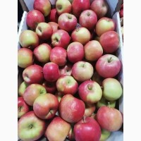 Яблоки оптом Айдаред