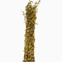 Семена сои сорт Славия. Урожай 2019 года
