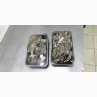 Продам грибы Вешенка свежие фасованные