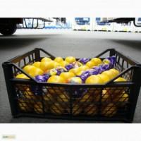 Апельсины, Лимоны Аргентина оптом