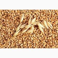 Пшеница 3-й, 4-й класс, лен, кукуруза желтая, белая