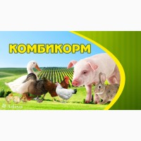 Комбикорм для свиней полнорационный