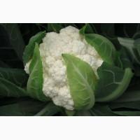 Семена капуста цветная Фламенко 2500 шт