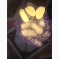Картофель оптом из Брянской области