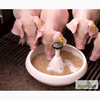 Комбикорм для свиней, комбикорм для откорма свиней