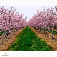 Земельные участки с закладкой орехоплодного сада в Крыму - 7, 5 га - 1.5 мил. руб