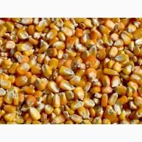 Фуражное зерно с доставкой в Архангельской области