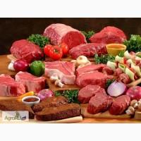 Мясо говядины и субпродукты из говядины